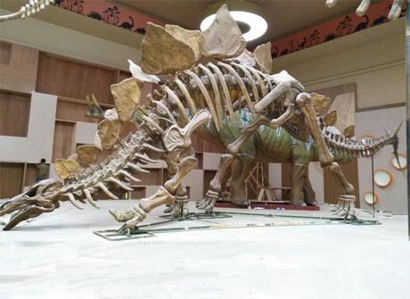 2019新款仿真恐龙骨架生产厂家